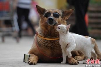 Gato-e-Cachorro-amigos-1