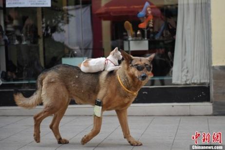 Gato-e-Cachorro-amigos-5