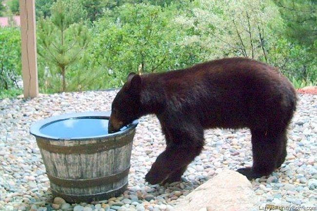 Urso-encontra-a-água
